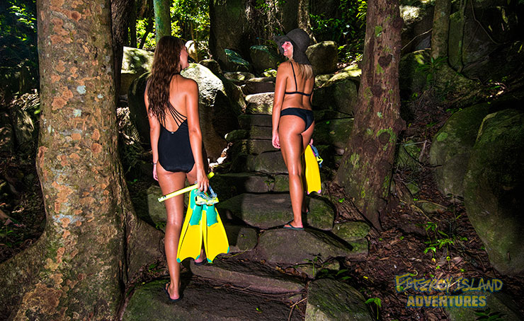 Rainforest Walks on Great Barrier Reef Island Tours