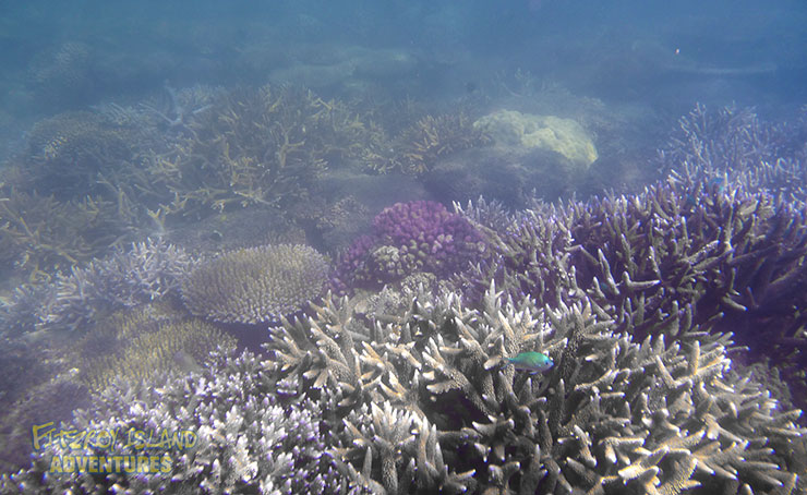 Coral and Fish At The Cairns Great Barrier Reef Islands