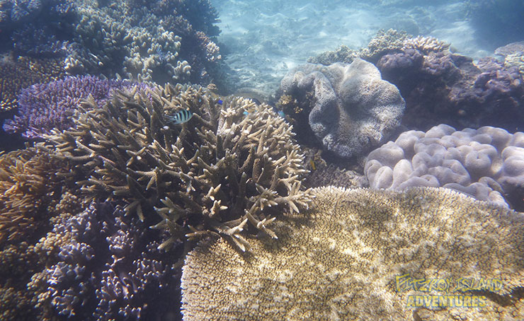 See Fish On Your Great Barrier Reef Holidays